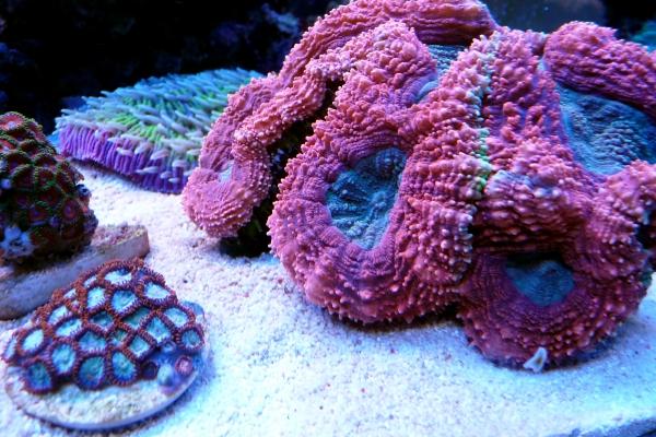 coralsv1-246AF2B46-AA8D-F7D9-09F9-DE20436A4C40.jpg
